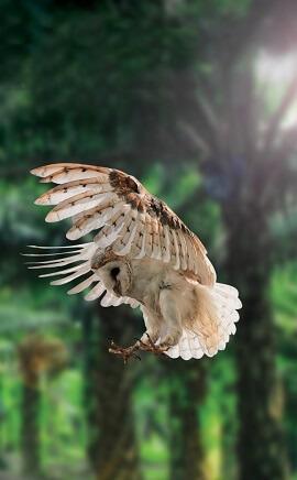 SDP_Owl small