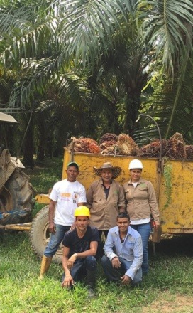During a break from collecting fresh fruit bunches plantation wokers on a smallholder farm pose for picture